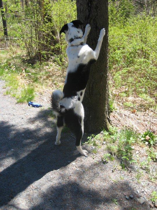 Rescue Dog Izzy's success story