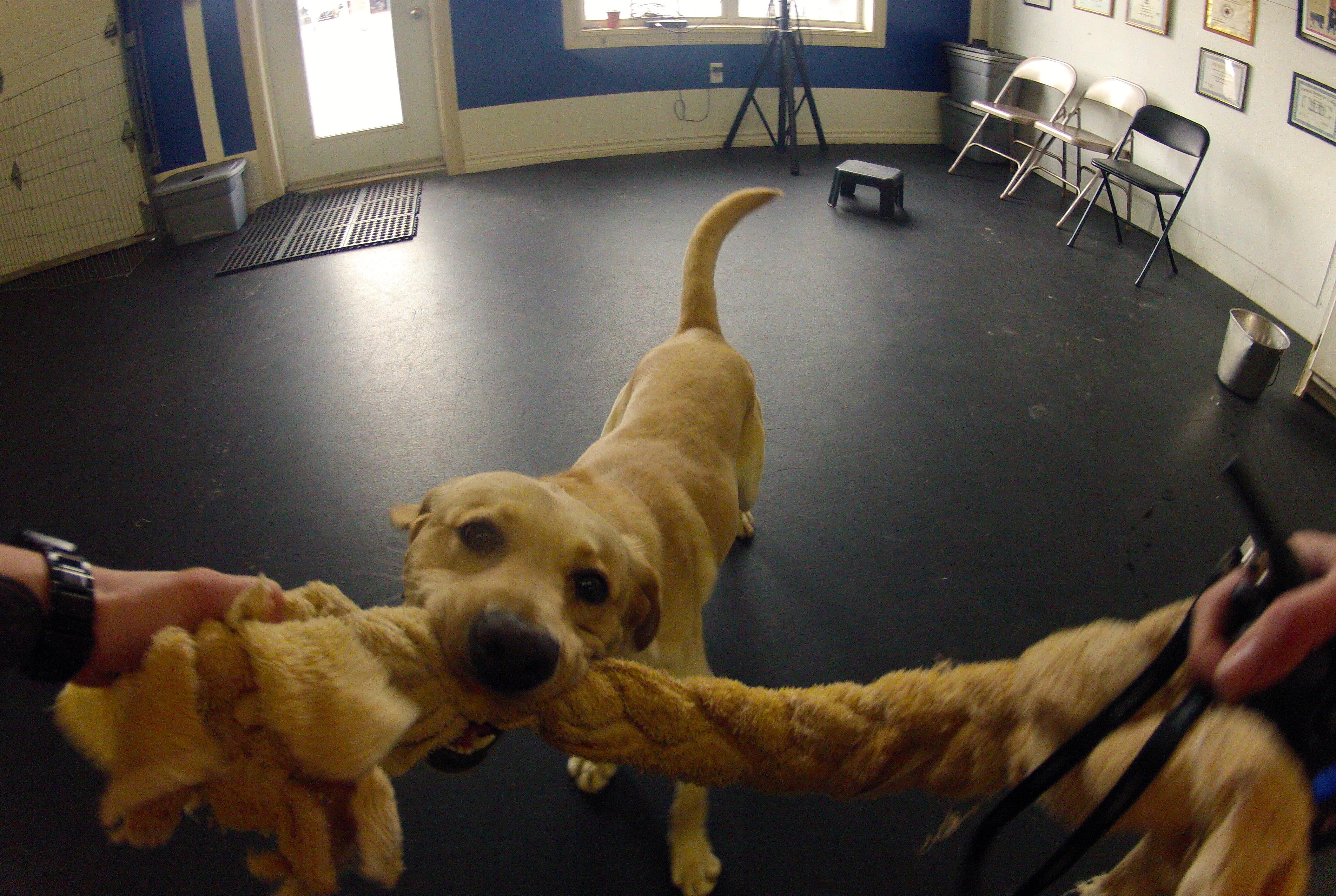 Methods of Dog Training