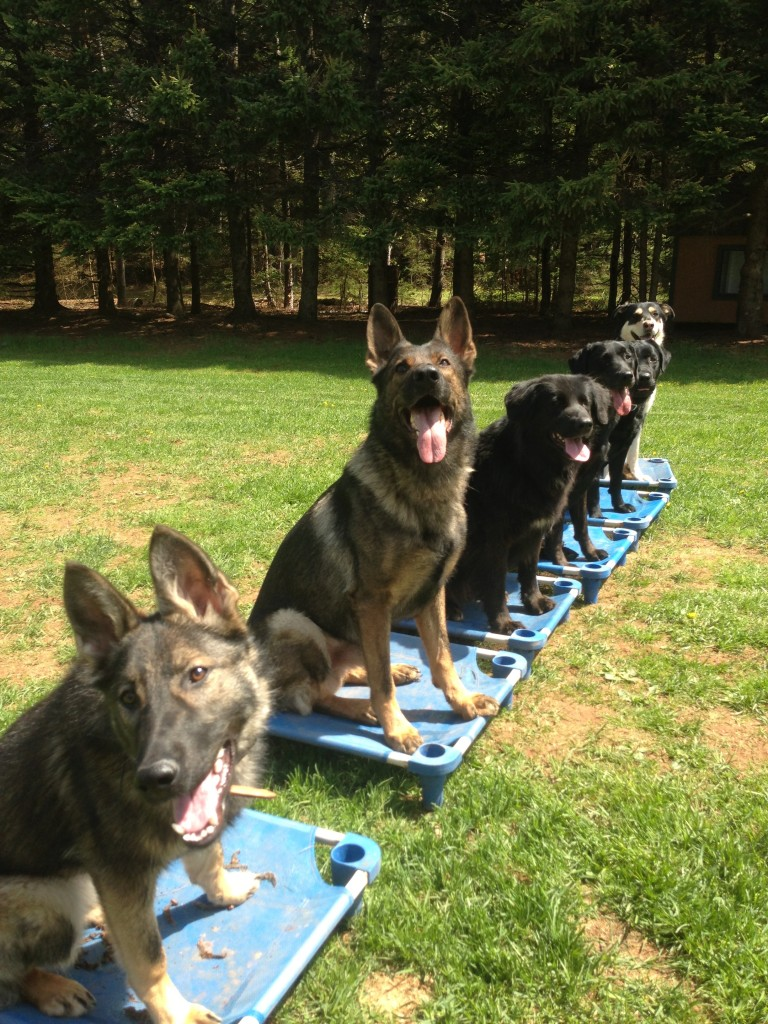 Do Dogs Forget Obedience They Have Learned?
