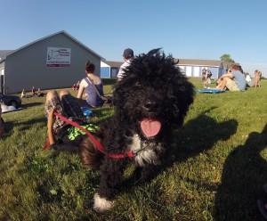 Puppymanagement129