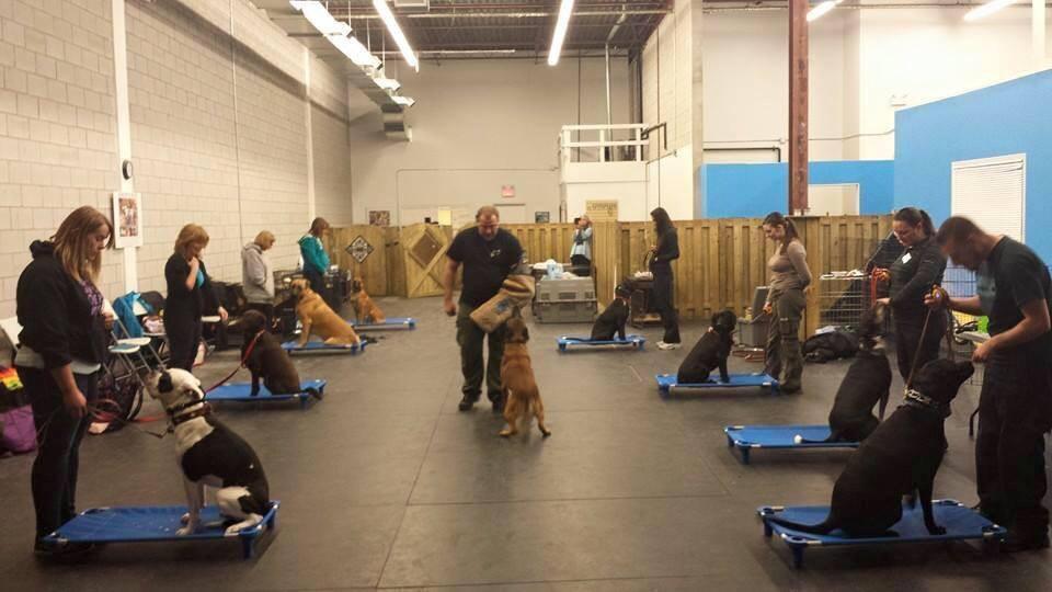 Dog Training San Diego County
