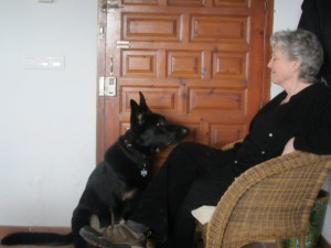 Online Skype Dog Training For The United Kingdom and World Wide
