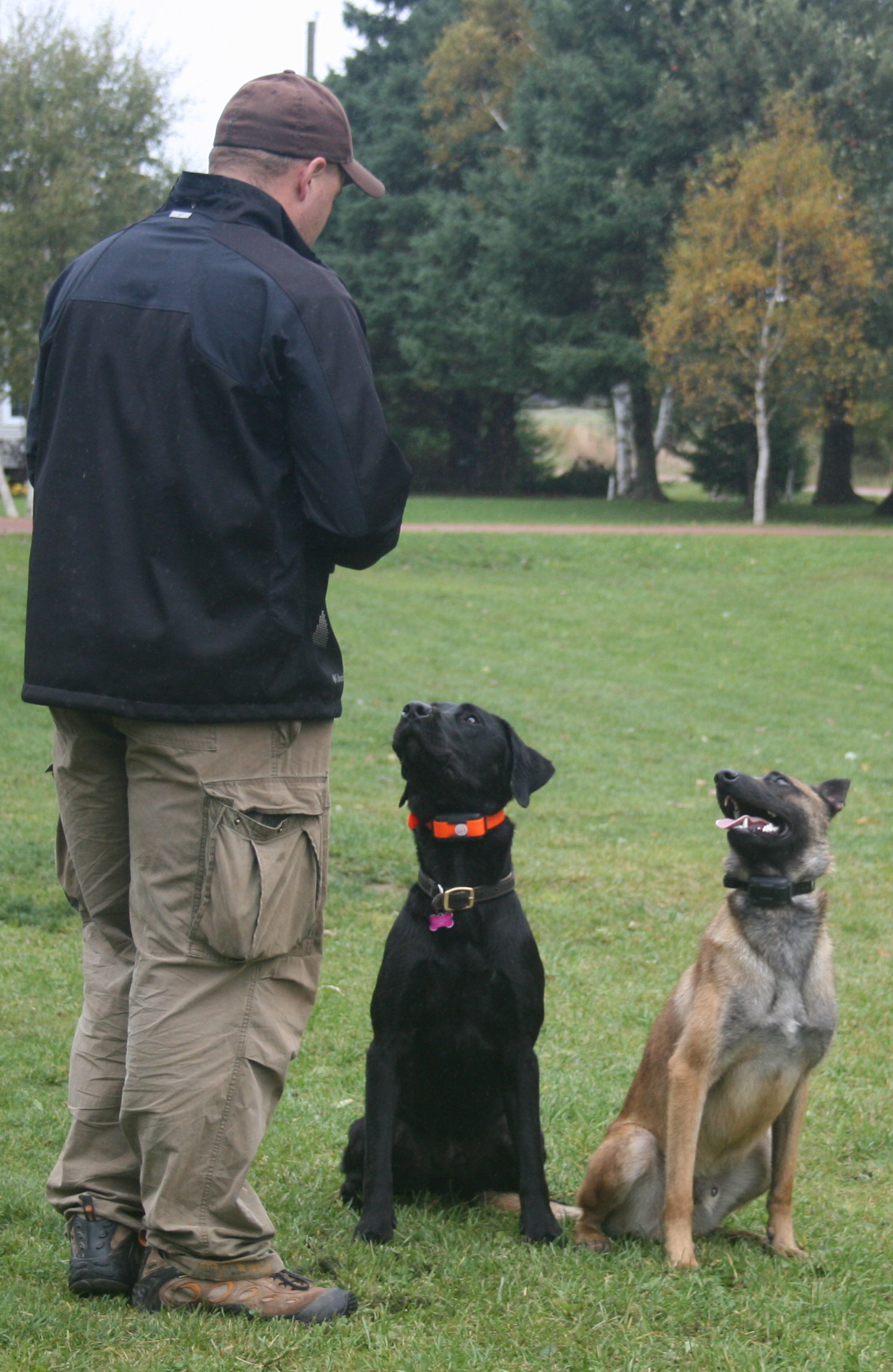 Education on Dog E-Collars