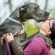 Great Dane OFF LEASH: Training a Shy Timid Dog, Testimonial Unleashed Potential, PEI
