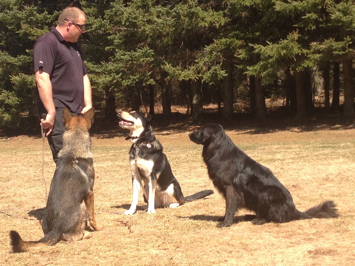 Use these 3 Simple Tips For Training Multiple Dogs At Home