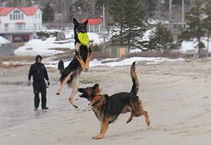 Custom Dog Training Halifax, NS
