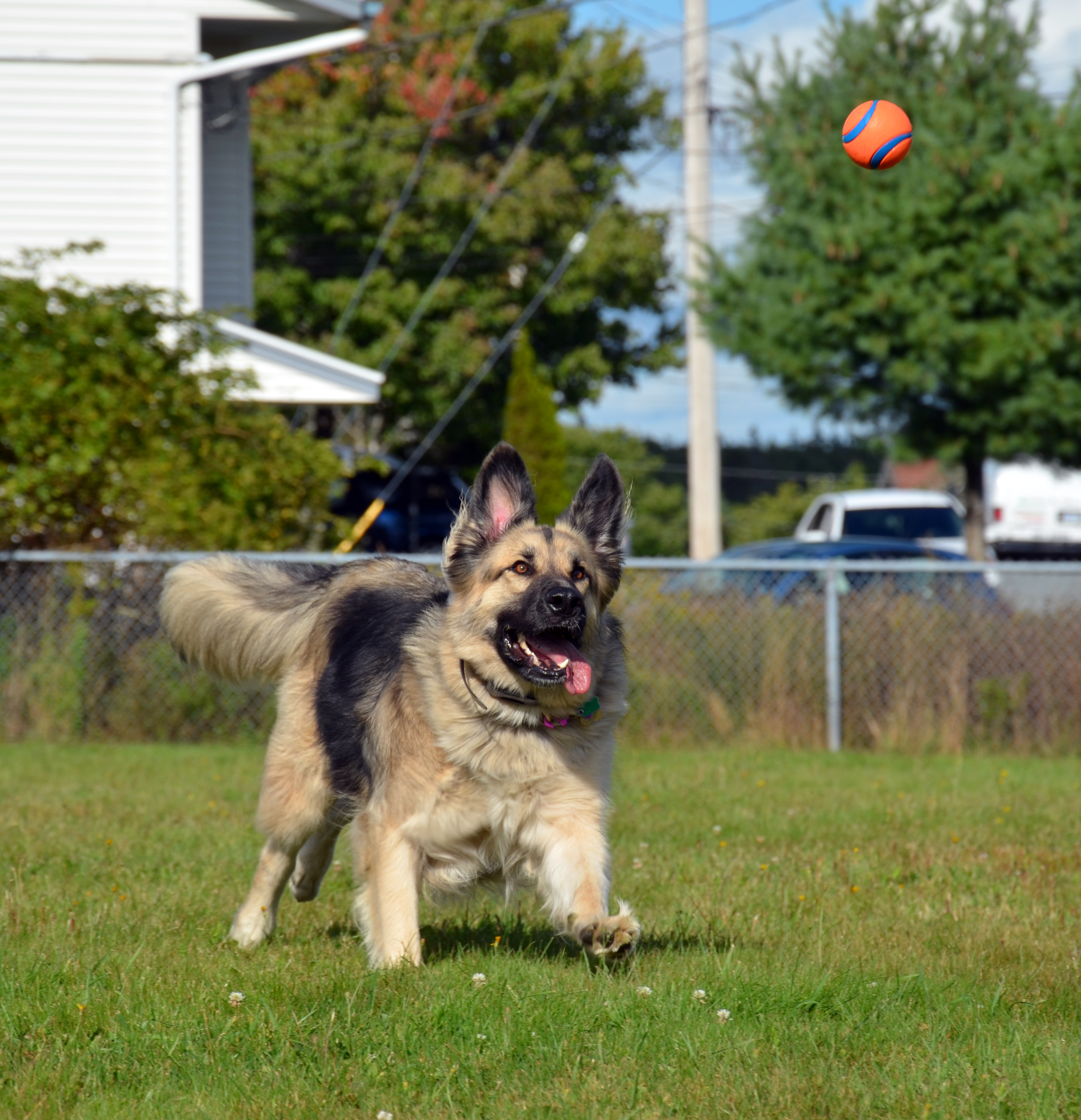Why I Became a Dog Trainer