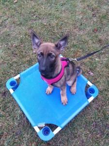 Puppy Training Halifax, Nova Scotia