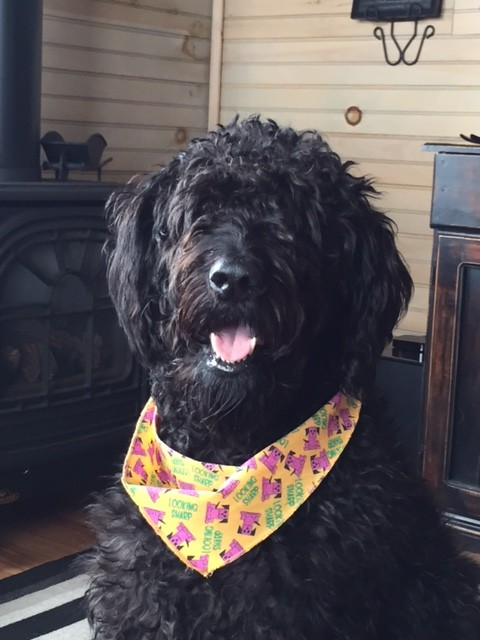 The Doodle Who Ate Everything! Testimonial