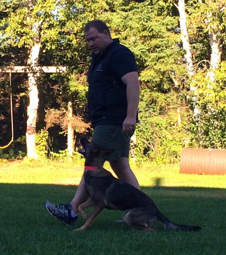 Modern Day Dog Training With Unleashed Potential. NePoPo Training