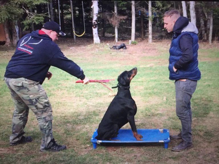 The Art Of Attention In Dog Training