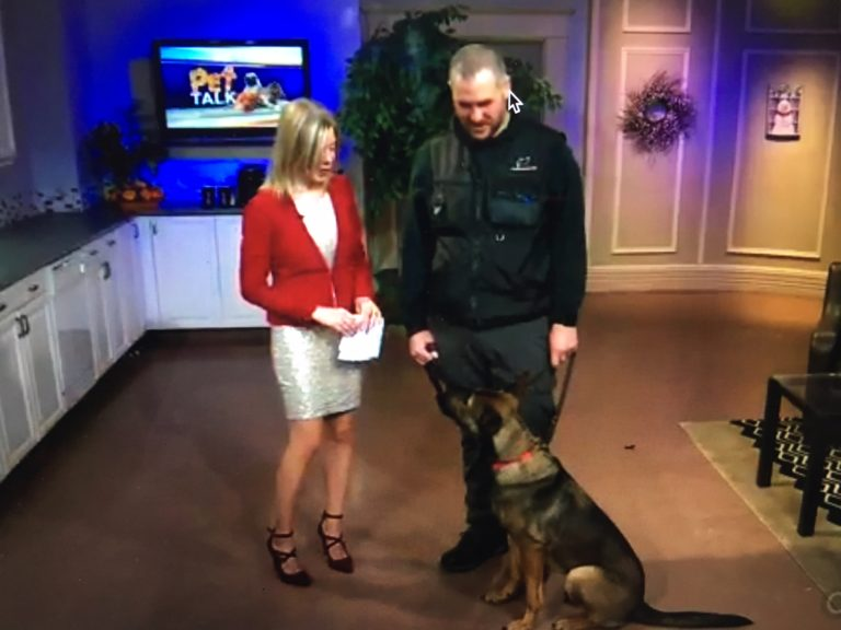 """""""As seen on TV""""  Dog Obedience and Socialization  UPK9 Halifax"""