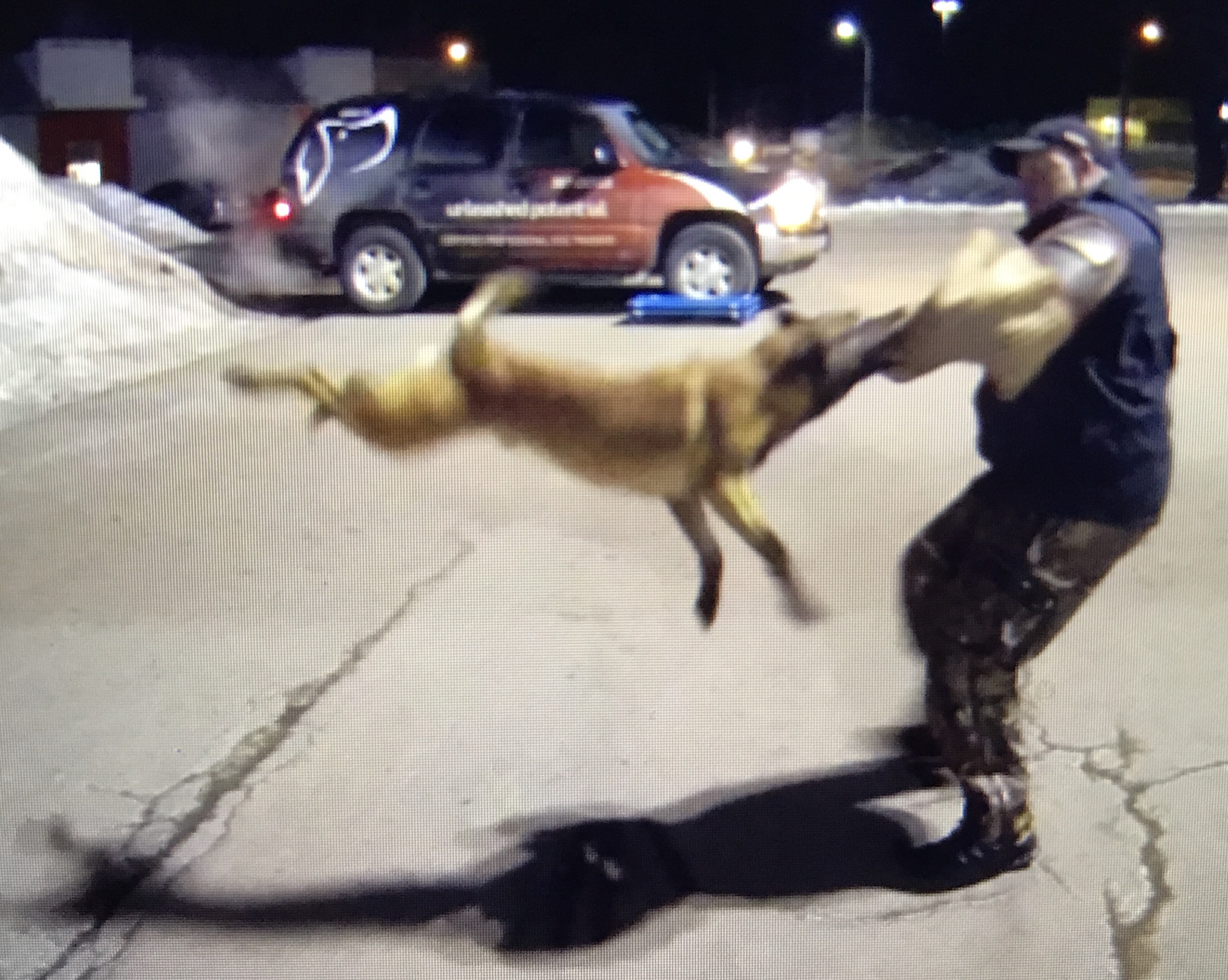 Dog Training Moncton