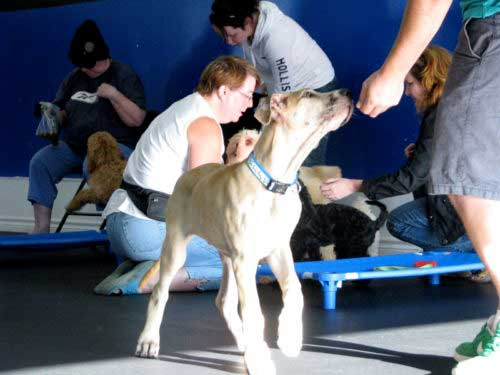 dog-training-puppy-training-1