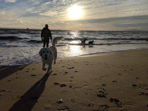 Golden Retriever Dog Training Huntington CA