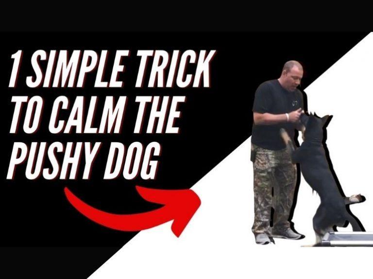 Calm the pushy dog