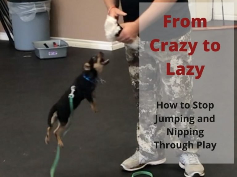 How to stop your dog from jumping using play