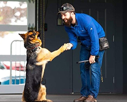 north-bay-ontario-k9-private-training