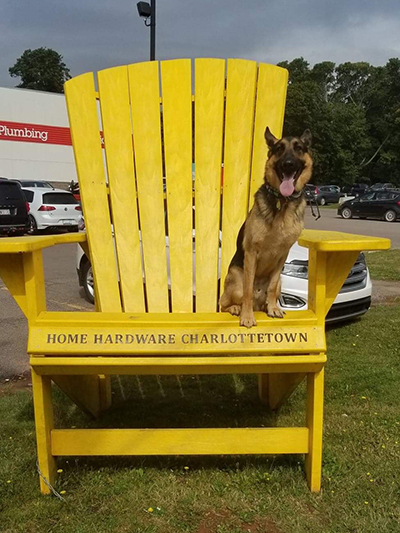 trapper-on-large-yellow-chair