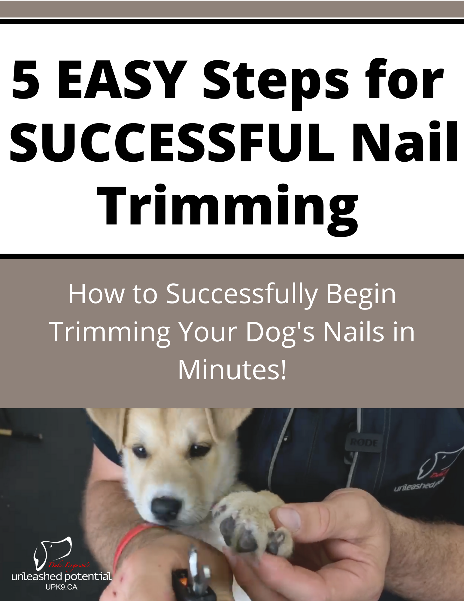 Dog nail trimming guide
