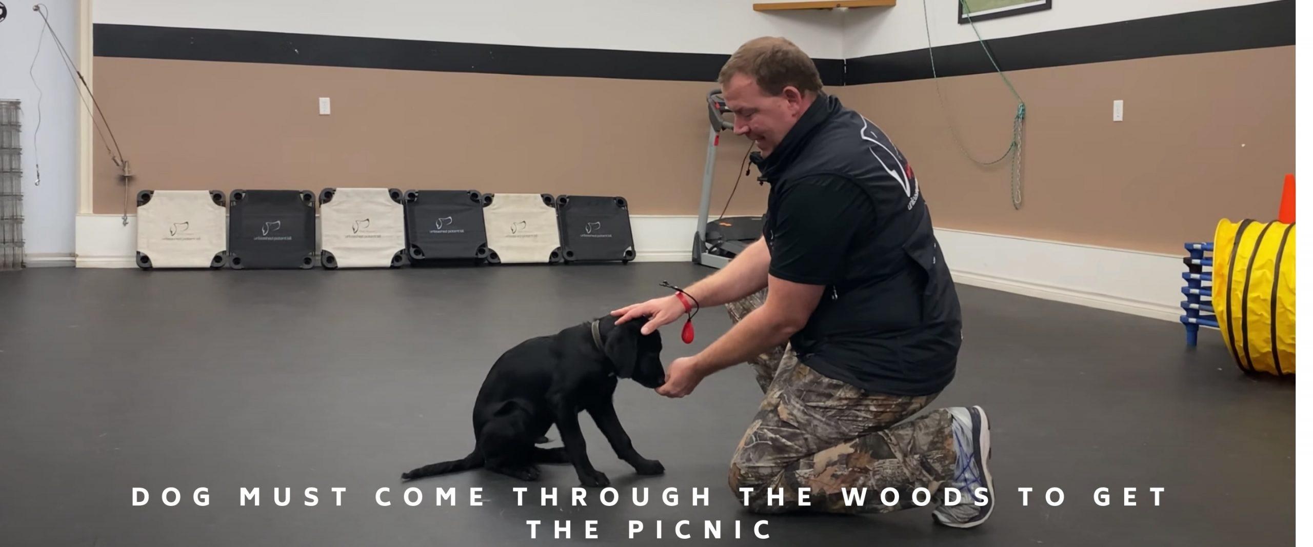 black lab puppy training
