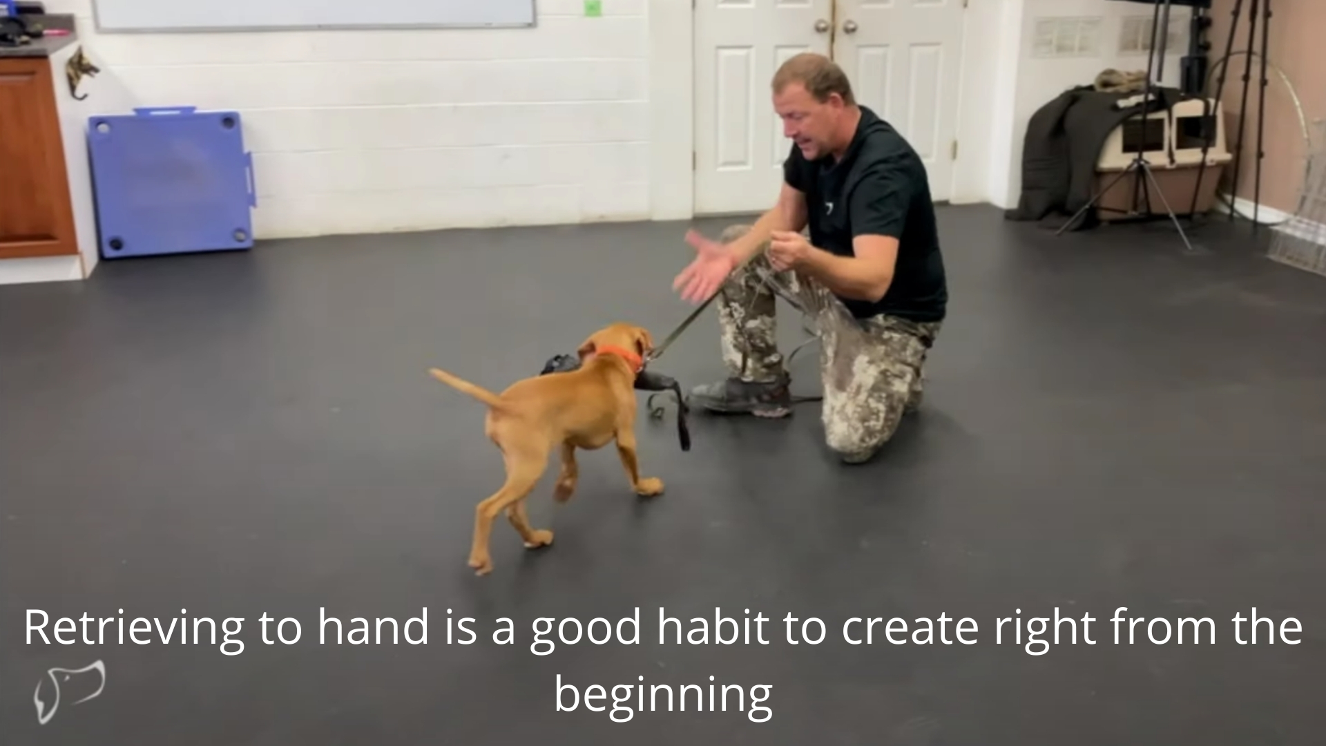 puppy retrieves toy to hand