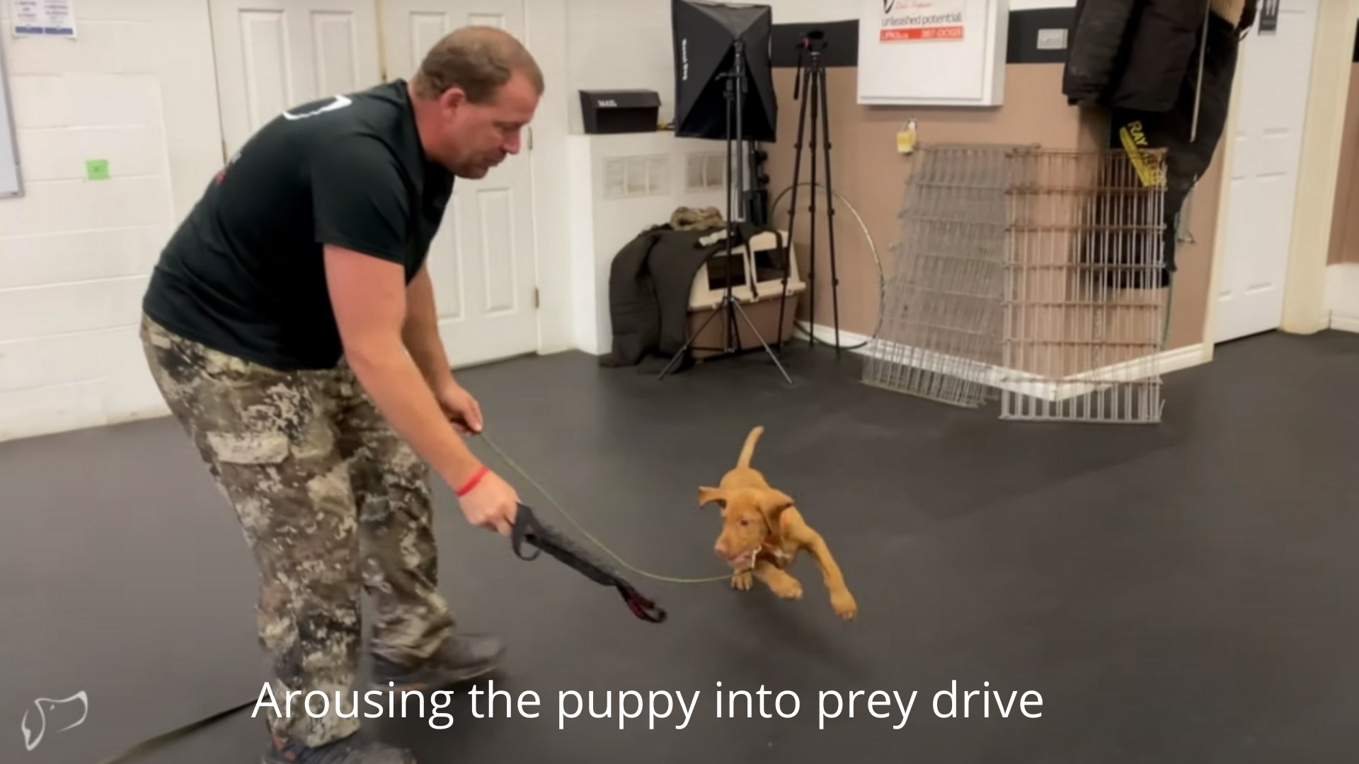 arousing the puppy into prey drive