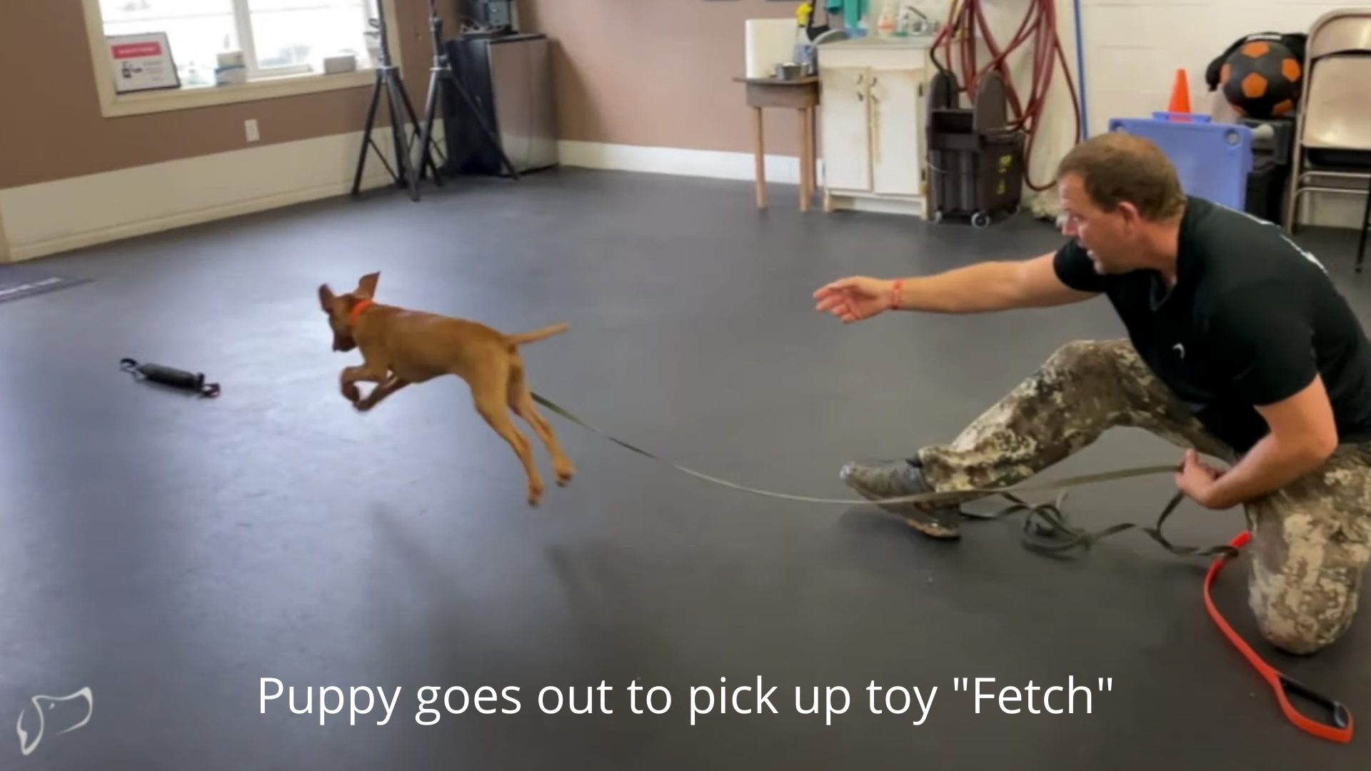 puppy goes out to fetch the toy