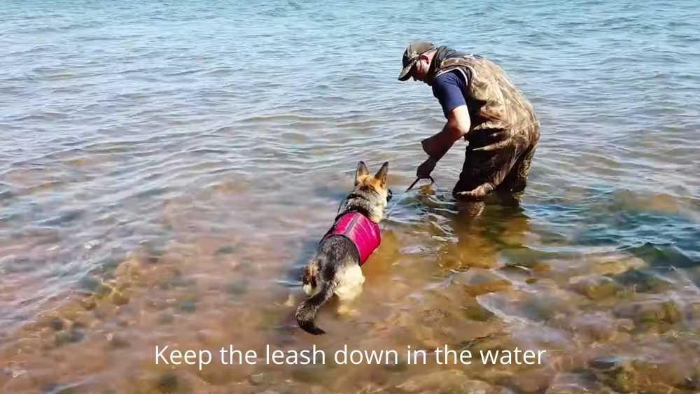 XDOG vest on dog swimming