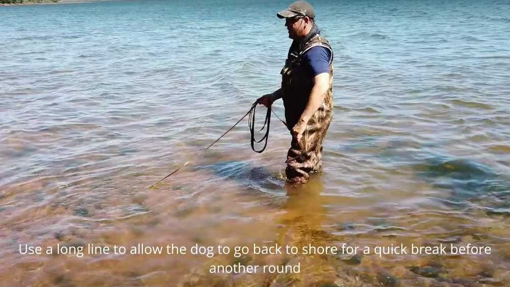 swimming a dog with long line