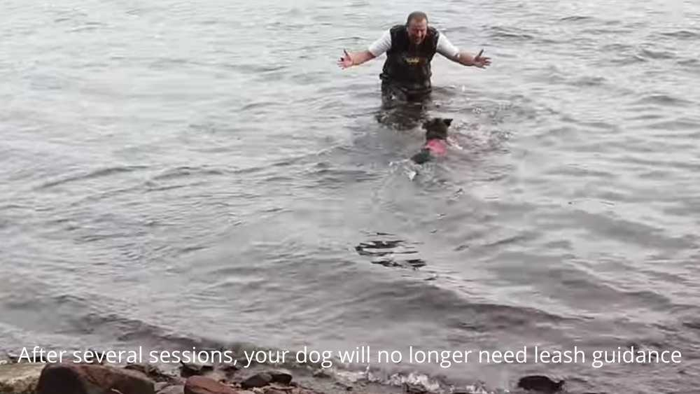 dog swimming from shore with Xdog vest on