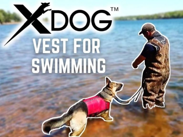 Dog Swimming with XDOG™ vest