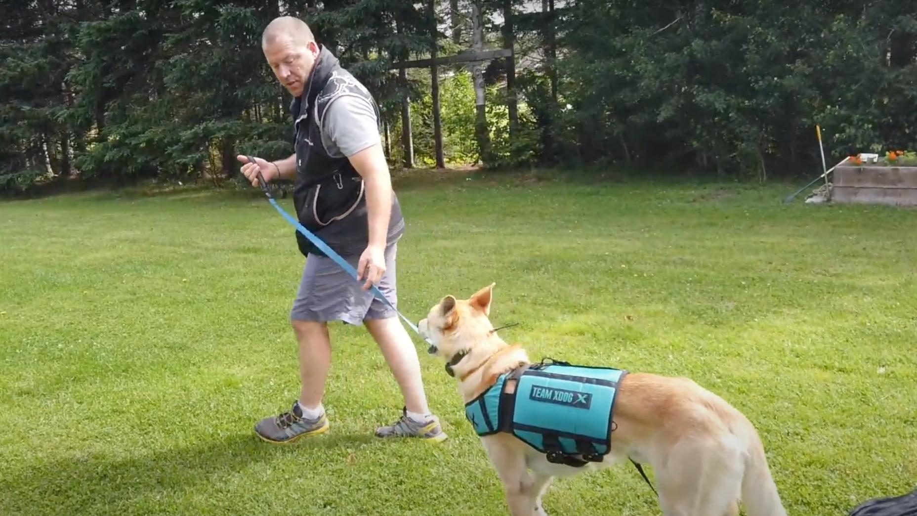 dog on leash with XDOG vest
