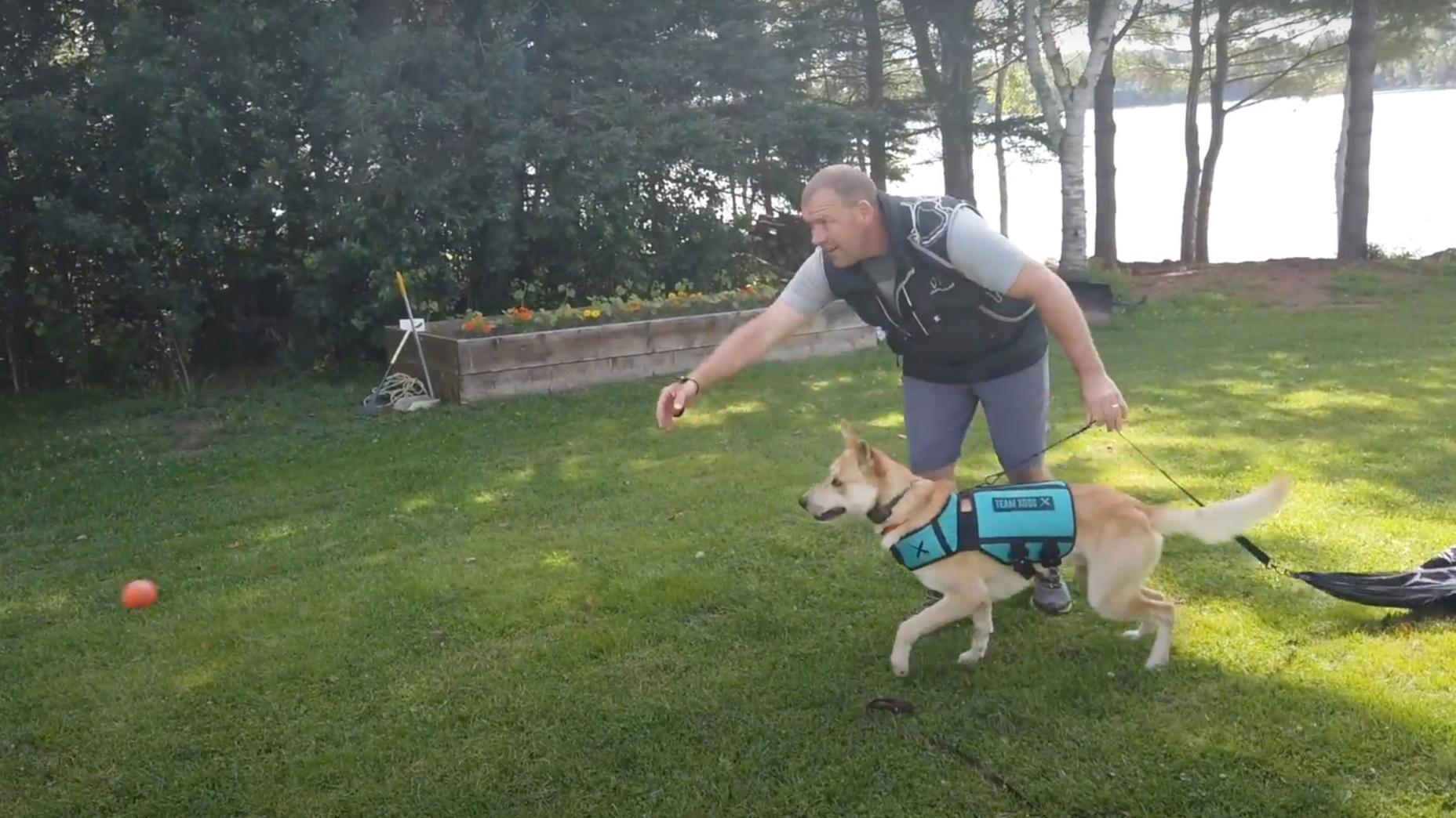 dog chasing ball in XDOG vest