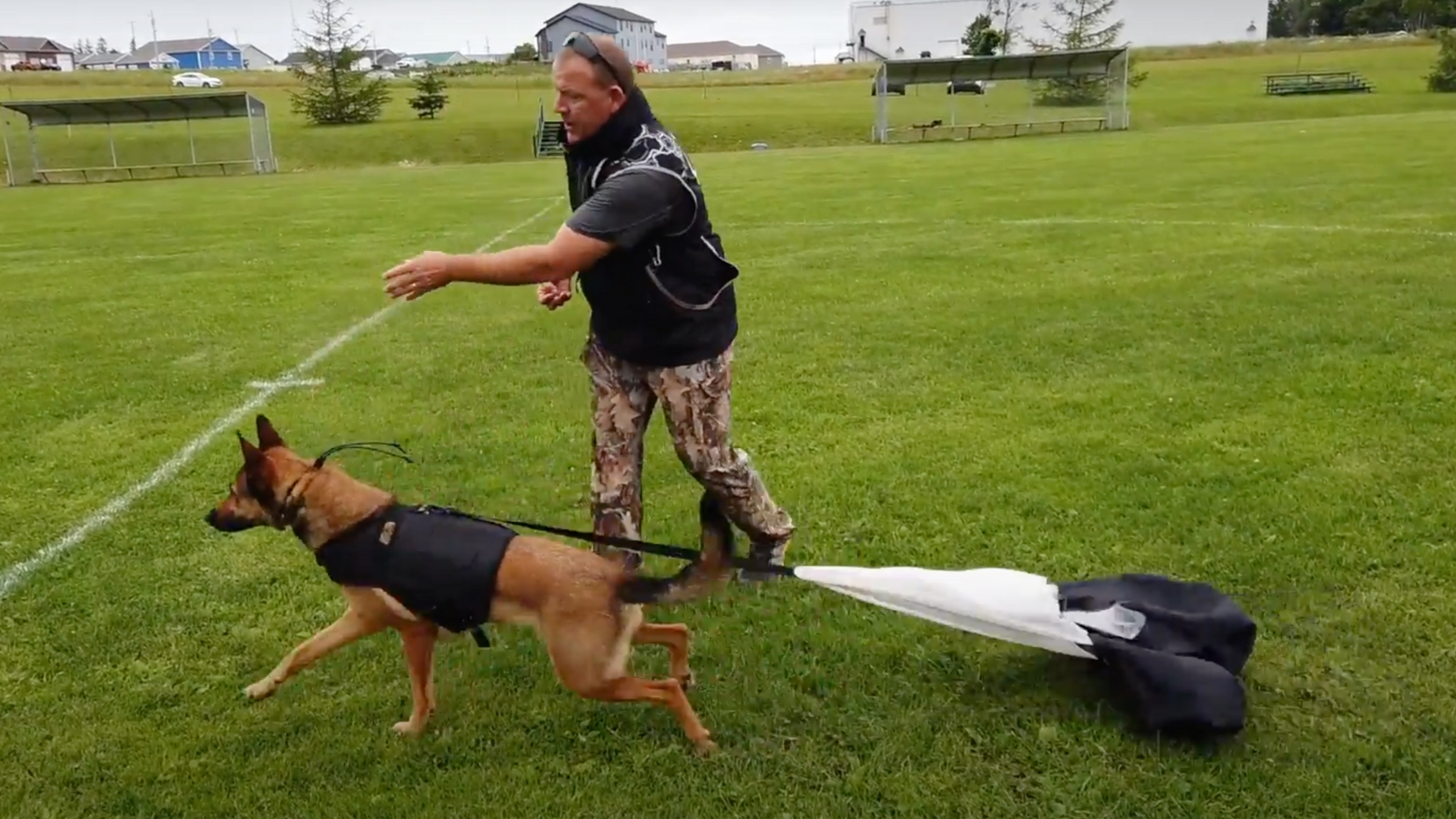 throwing food for dog in XDOG vest