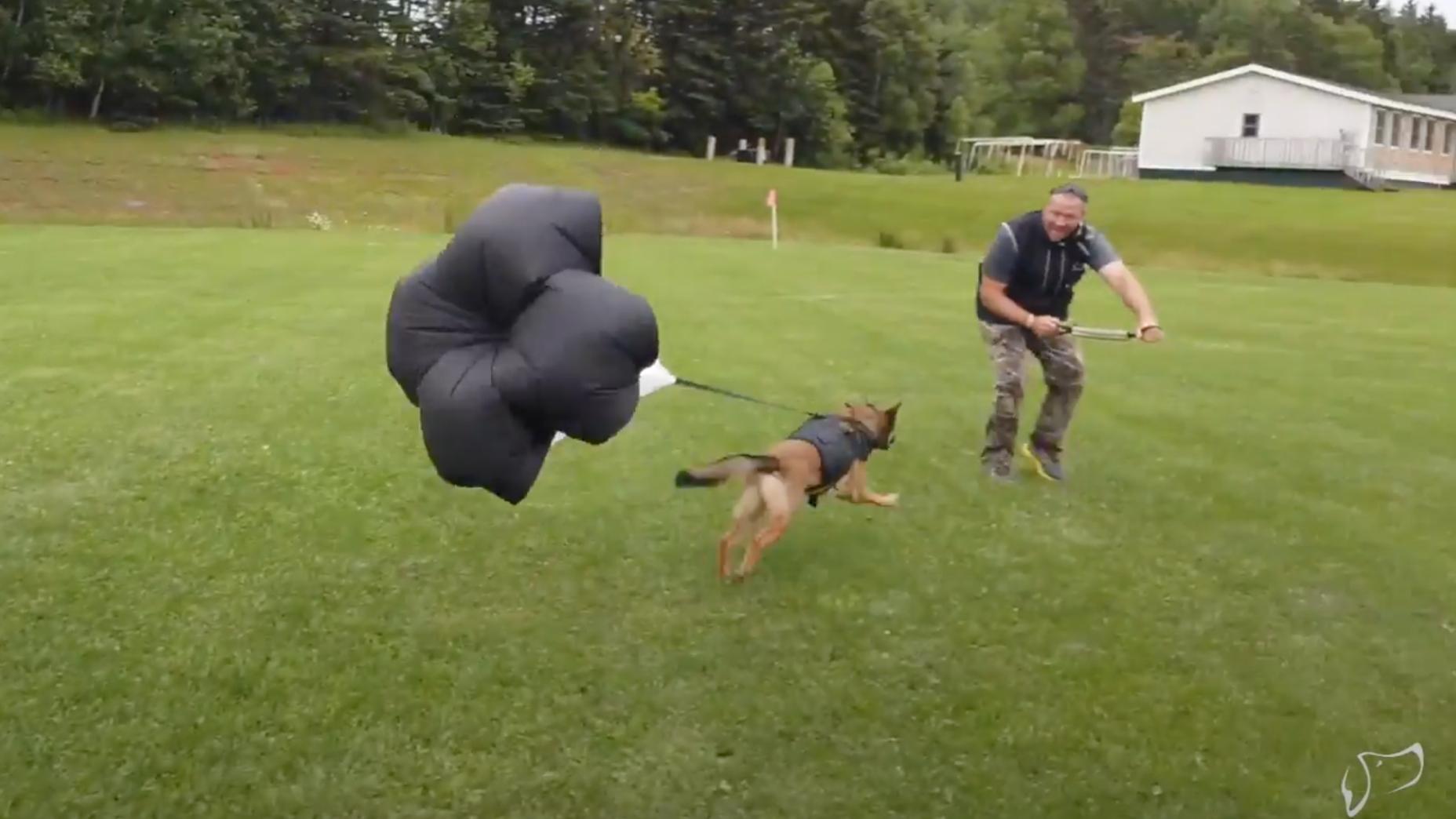 dog resistance training