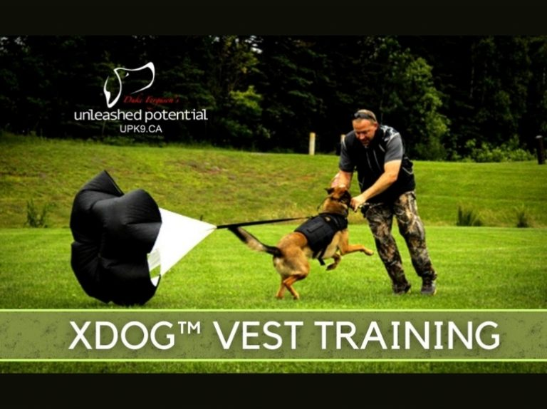 XDOG vest and parachute tarining